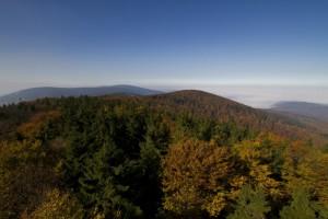Rezerwat Bukowa Kalenica - widok z wieży